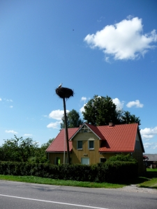 Ever wonder where storks (and by extension, babies) come from? Latvia. Every post in the country seemed to have a stork nest atop it. (Photo: Brett Neely, 2009)